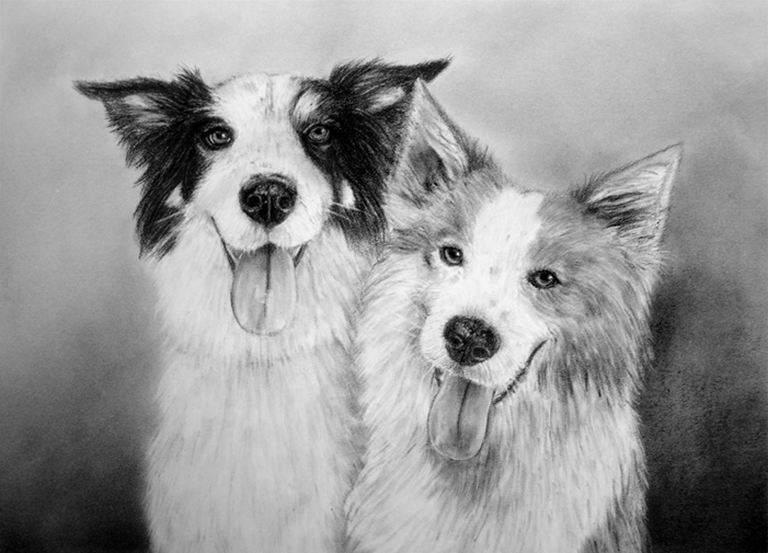 Doppelportrait von Border Collies