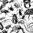 Käfer - Cluster