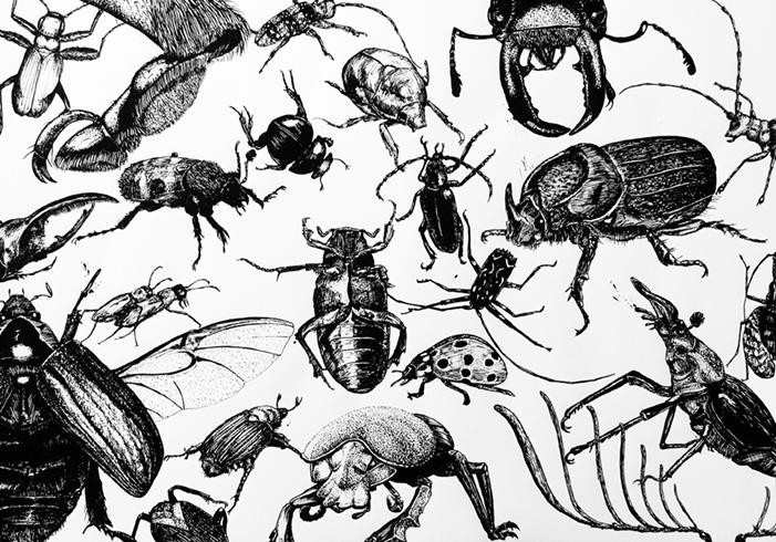 Käfer-Cluster