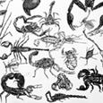 Skorpionssymphonie
